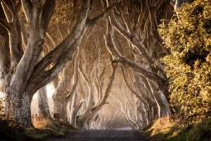 Game of Thrones - The Dark Hedges. Photo: Tourism NI